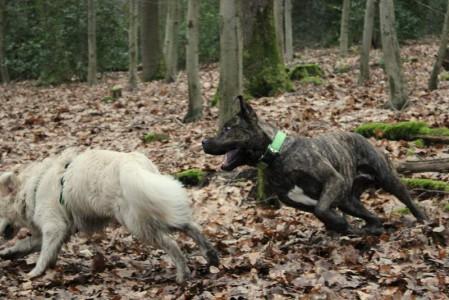 Wenn Hund Angst hat - manchmal ist es nur die fehlende Erfahrung im Umgang mit Artgenossen.