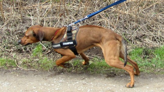 Leinentraining in der Hundeschule in Dortmund