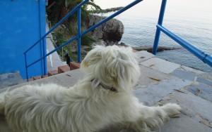 Hund im Urlaub Entspannte Vorbereitung