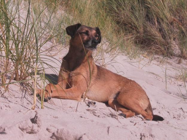 Urlaub mit Hund - Hundeurlaub