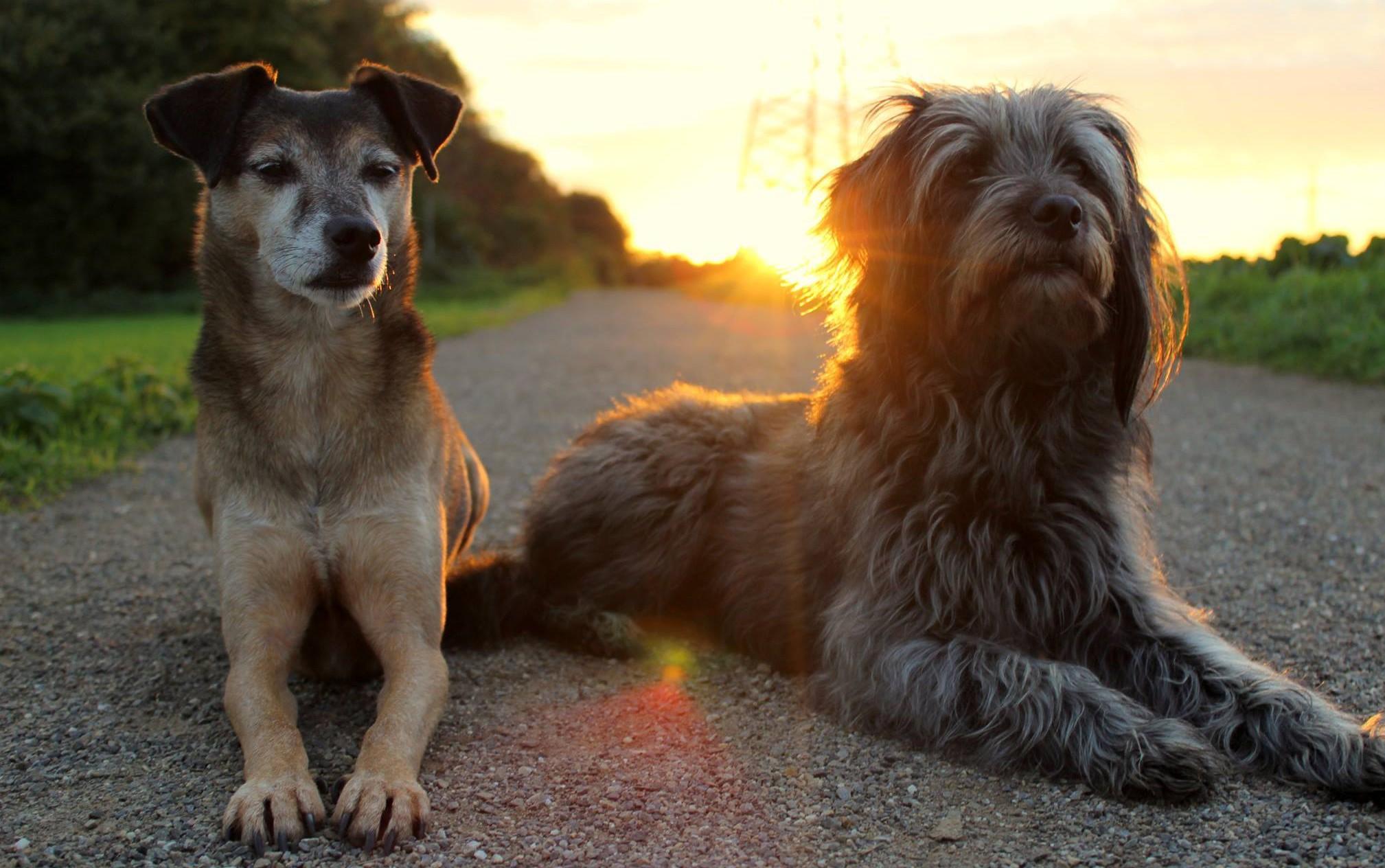 Lonny und Milla im Sonnenuntergang