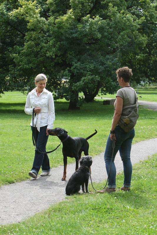 Kundin Kamilla Kanafa und ihr Hund Diego sollen ohne Zicken an Hund Milla vorbeigehen.