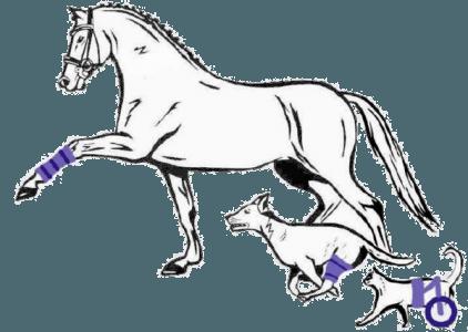Tierprothesen: tieragil.de