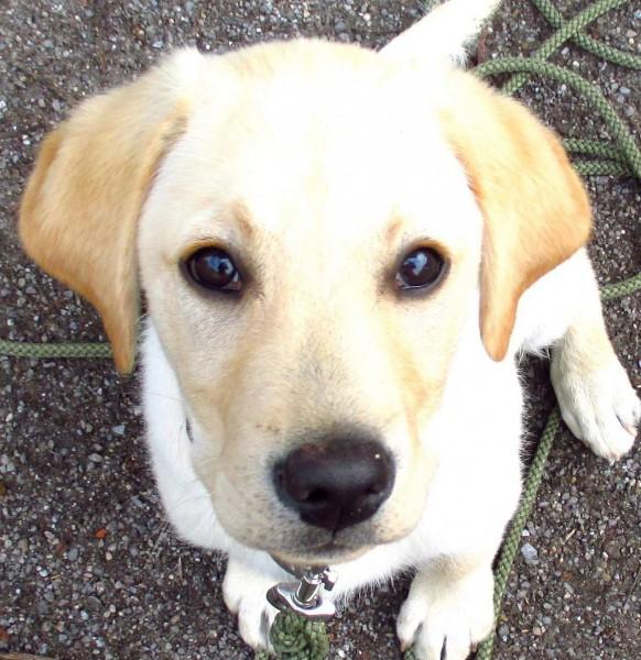 Hundeschule Termine - NEU: Welpenkurs für junge Hunde in Dortmund