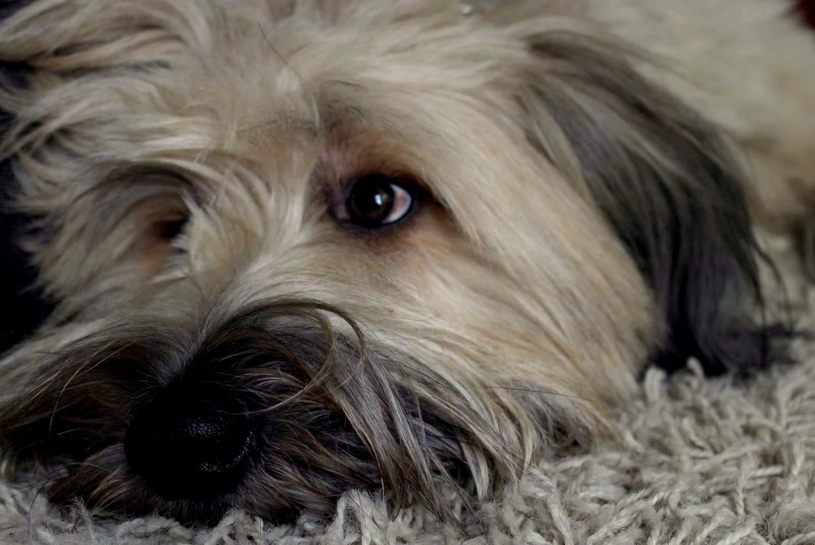 hunde besch ftigen indoorspa f r hunde. Black Bedroom Furniture Sets. Home Design Ideas