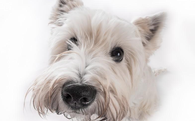 Eine kleine Hundepersönlichkeit!