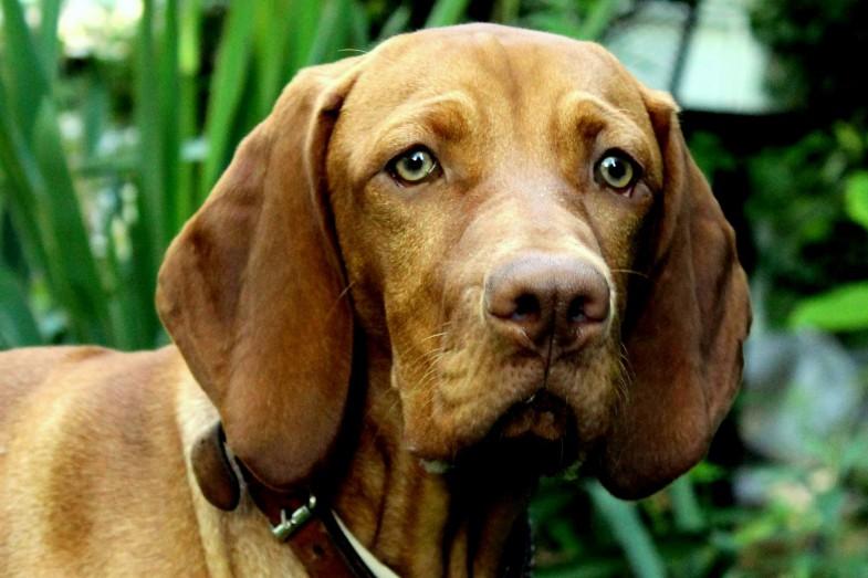 Hundepersönlichkeit - Wenn ich groß bin...