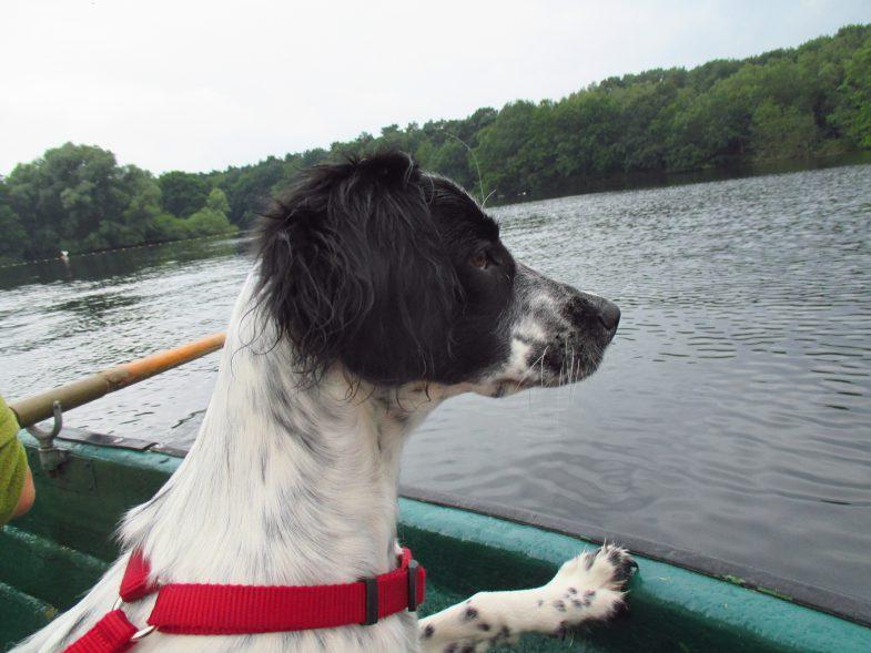 4.See-Hunde