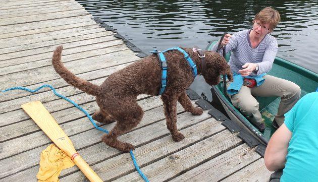 Hunde: Angst vor Wasser