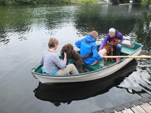 Desensibilisierung von Hunden - Angst vor dem Wasser?