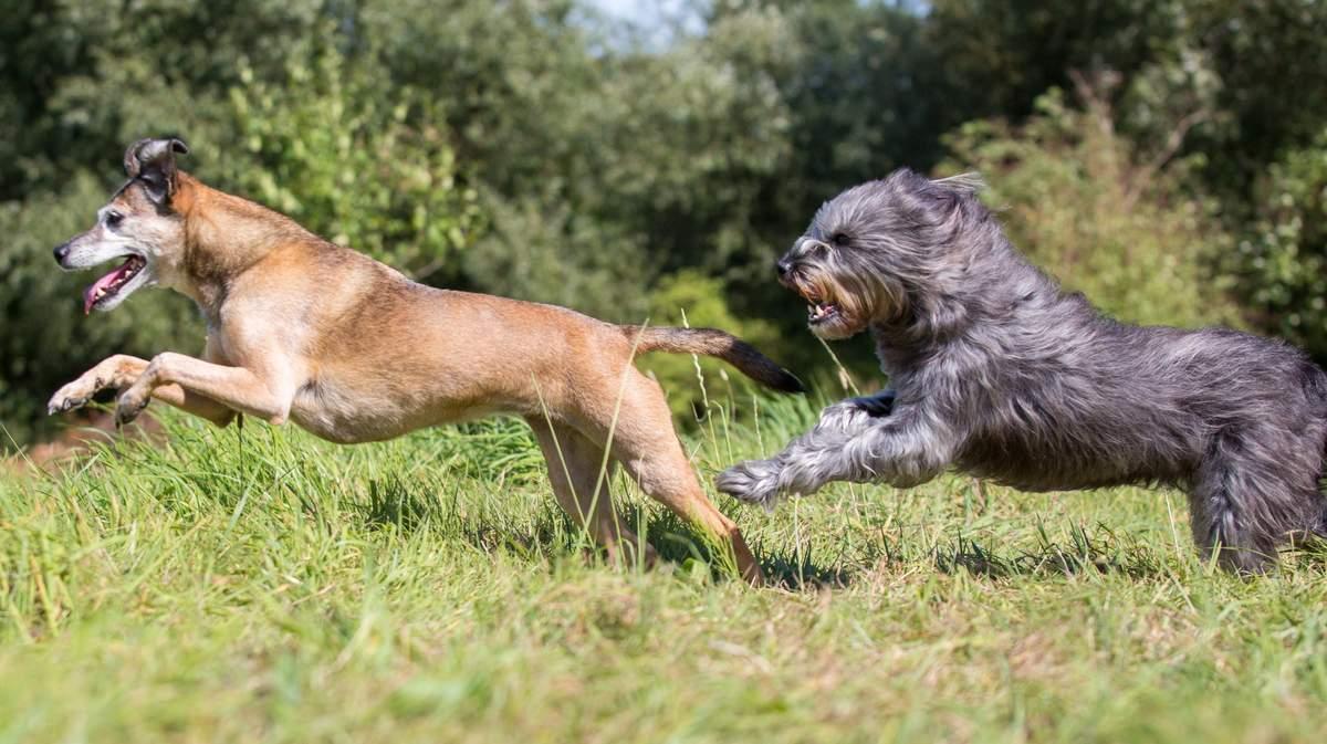 Hunderziehung dauert ein Hundeleben lang