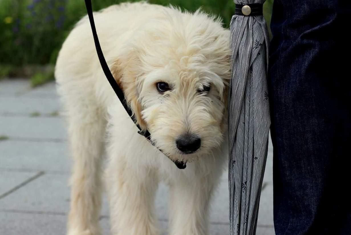 Die Welpenzeit prägt den Hund fürs Leben