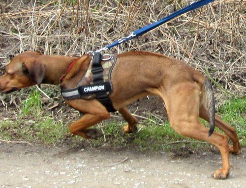 Vom Hundeflüsterer und schwerhörigen Hunden