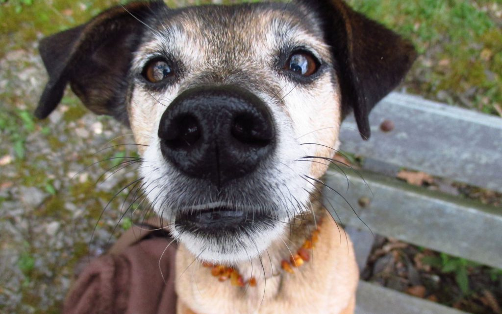 Hundetraining Dortmund - Lonny Riesen Nase