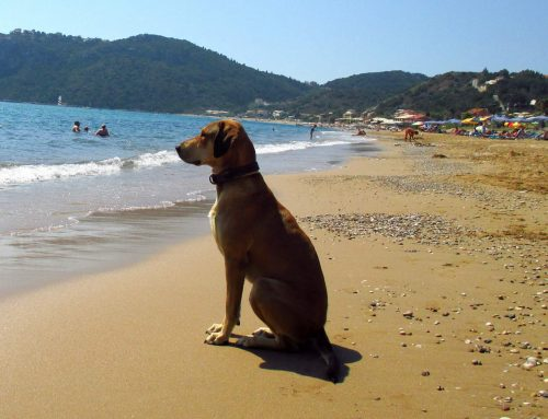 Urlaub mit Hund oder Hundeurlaub ✈