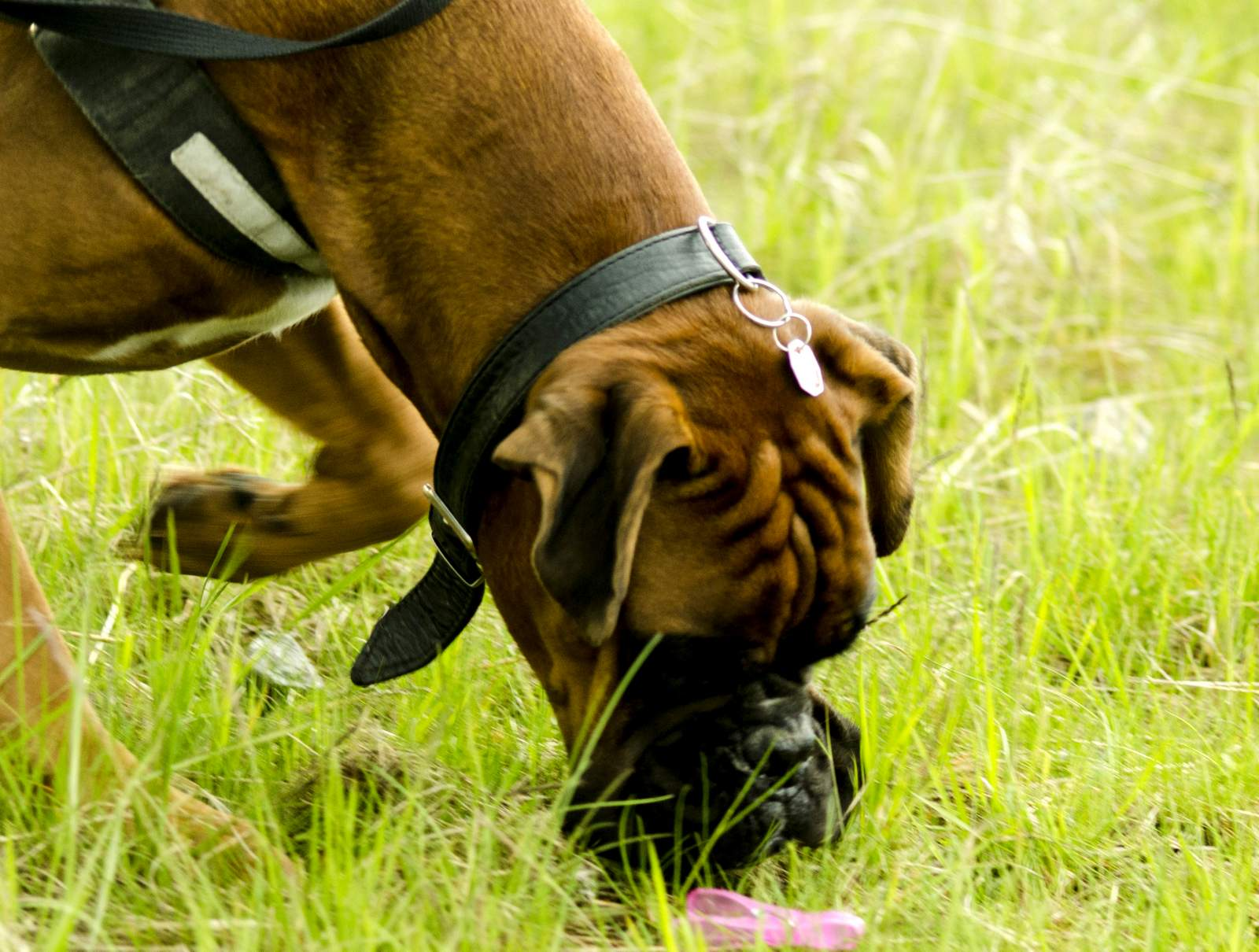 Hundeschule Termine - NEU: Schnüffelkurs für Hunde in Dortmund