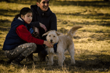 Hundetraining Dortmund Termine der Hundeschule