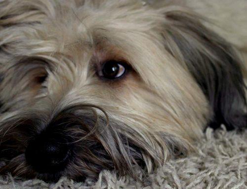 """Hunde beschäftigen – """"Indoorspaß"""" Zuhause"""