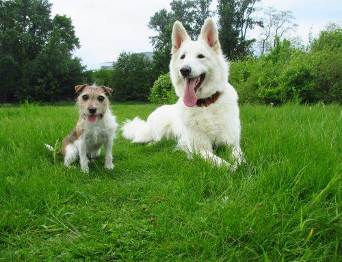 Hundepersönlichkeit und die Persönlichkeit der Hunde