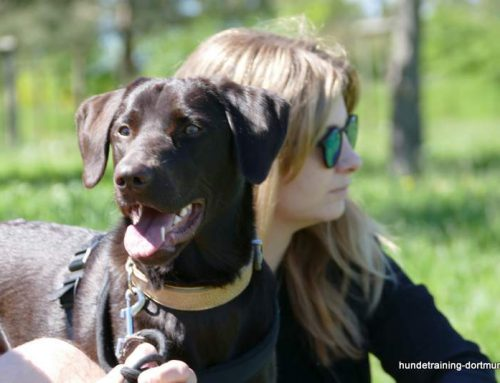 Die Beziehung zwischen Mensch und Hund