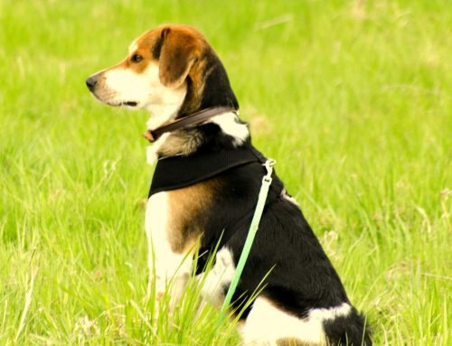 Mantrailing ist Nasenarbeit für den Hund