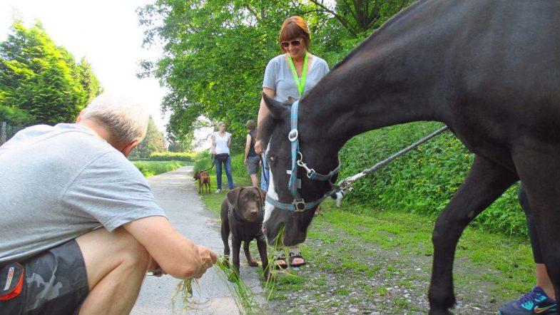Gruppentraining mit Pferd