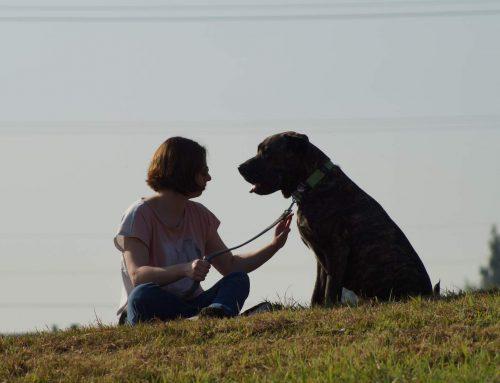Meinen Hund neu kennenlernen