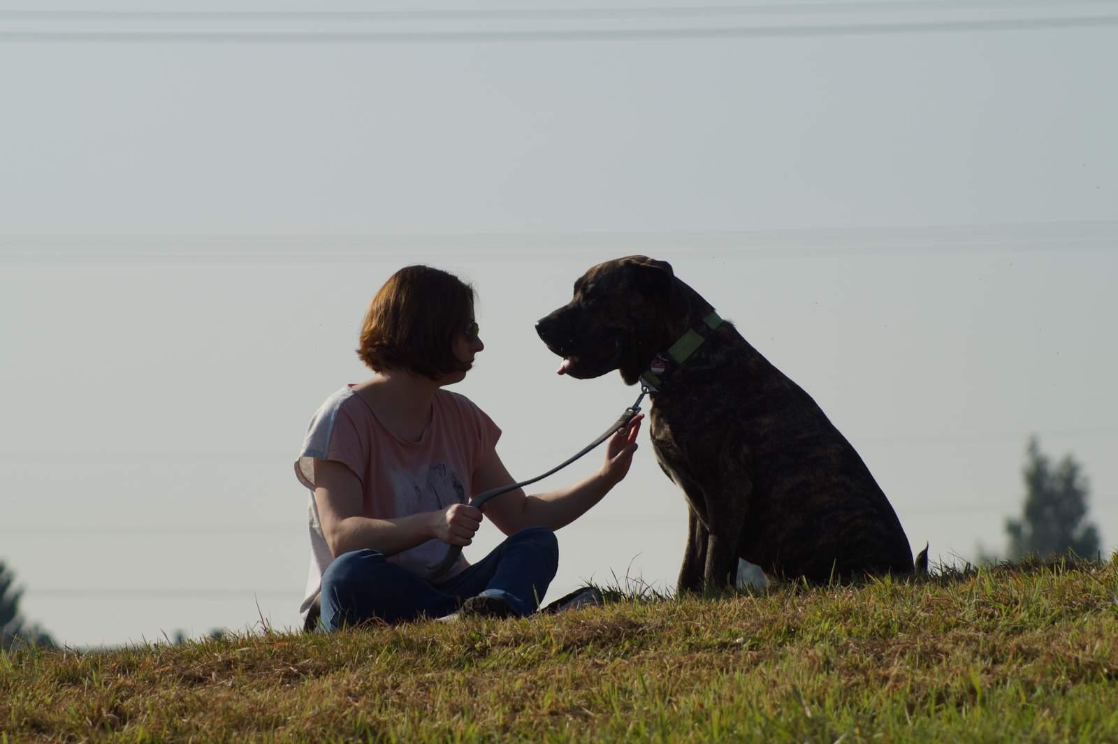 Hunde kennenlernen