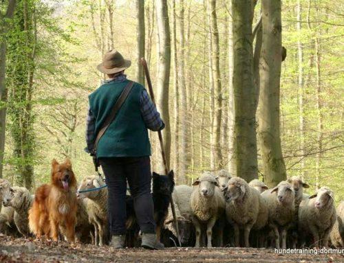Von Hunden und Schafen