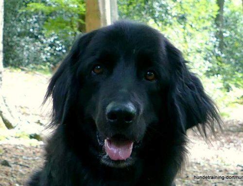 Problemhund-Hundeprobleme